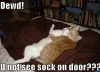 funny_pictures_college_sex_cats-s500x375-135469